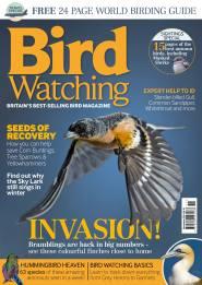 Birdwatching November 2014