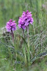 170701 Gorie orchids HSO x blogsize